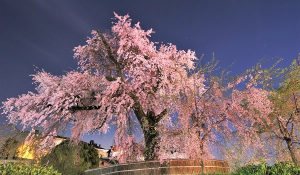 iPhone7で夜桜を綺麗に撮影しよう Xperia X CompactやSIMフリースマホと比較